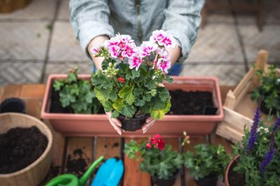 15 garden tips for May