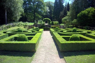 How to care for topiary plants