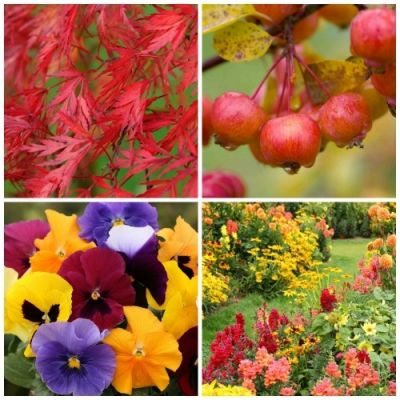 Win €250 worth of autumn plants!